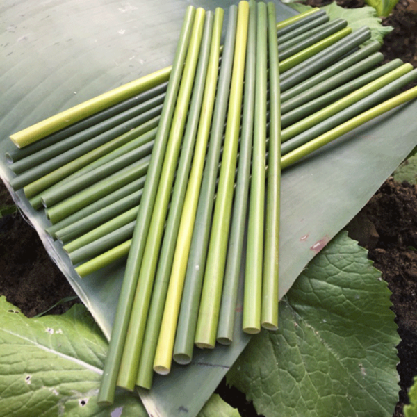 ống hút cỏ bàng tươi fresh grass straws